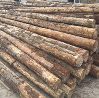 星泽林木业 澳大利亚辐射松原木 22-28cm*4.0m